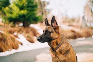 Lexington Dog Bite Lawyers